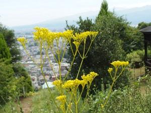 松田山ハーブ園の風景です