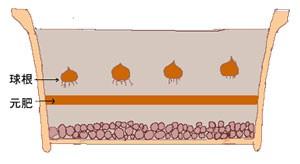元肥 プランター植えの場合