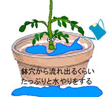 肥料 水やりのイラスト