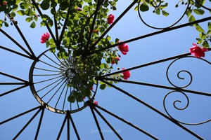 秋の神代植物公園・バラ園の風景