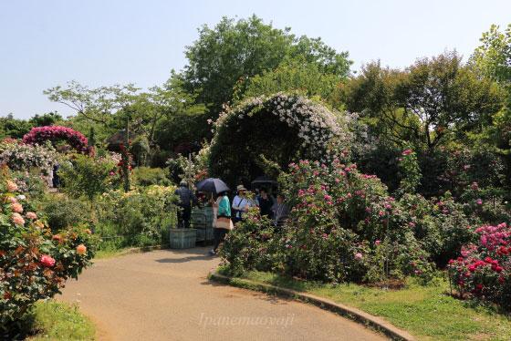 ある晴れた日の花菜ガーデンの風景