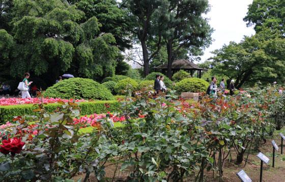 旧古河庭園の風景