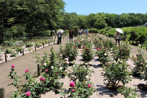 春の神代植物公園の風景