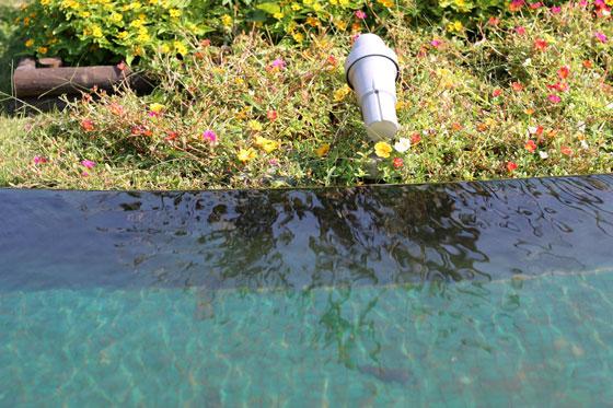 二子玉川にある園芸店のバラ園の風景
