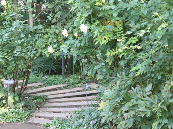 横浜にあるバラ園の風景