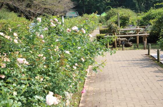 湘南近くの公園の風景