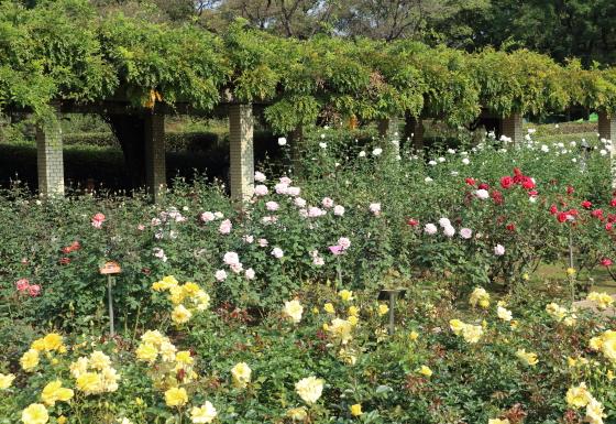 春の神代植物園の風景
