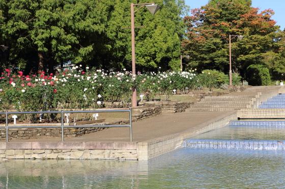 相模原北公園・バラ園の風景