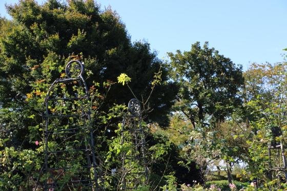 秋のバラ園の風景