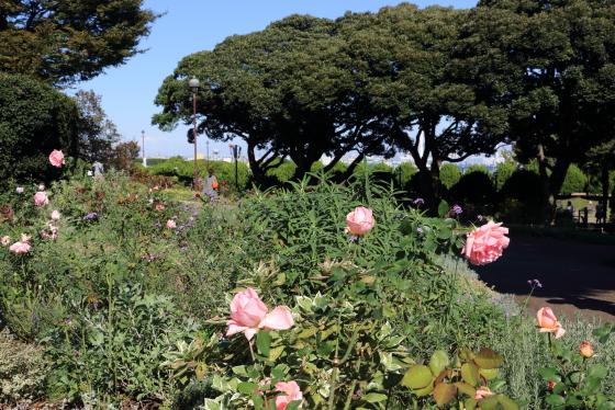 港の見える丘公園・バラ園の風景