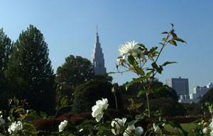 新宿御苑の庭内のバラ