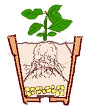 鉢植えの植え替え その3