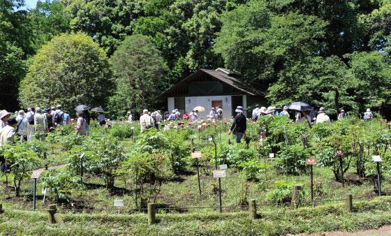 春の神代植物公園