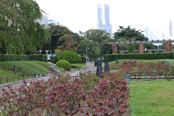 早春の山下公園・バラ園の風景