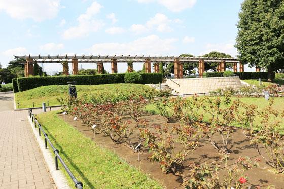 春の山下公園・バラ園の風景