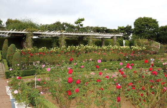 谷津バラ園の風景です