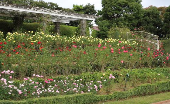 谷津バラ園の風景