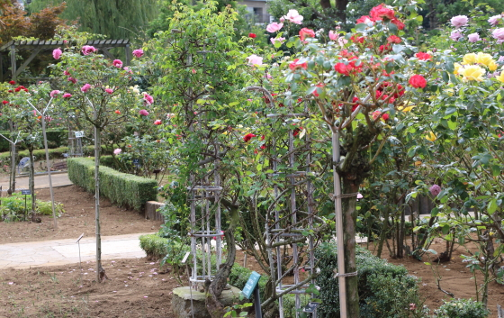 バラ園の風景