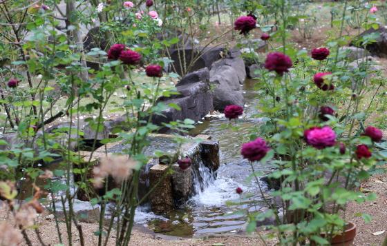 春の谷津バラ園の風景