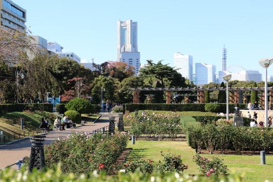 横浜・山下公園・バラ園の風景