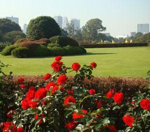 新宿御苑 風景