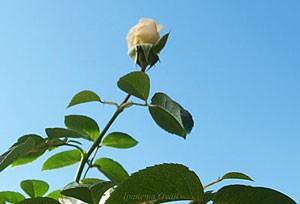 サマー メモリーズは秋まで返り咲きます