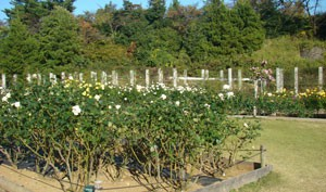 生田緑地ばら苑 風景