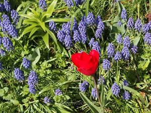 大船植物園の春の花