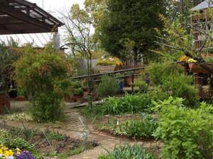 多摩グリーンライブセンターの小さなハーブ園