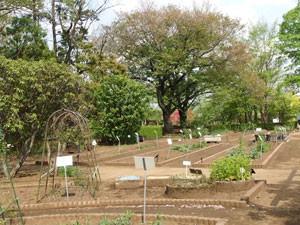 東京都薬用植物園の整備された畑です
