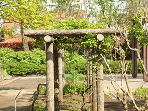 東京都薬用植物園の藤棚も葉だけが茂っていた