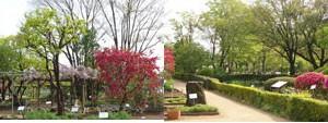 東京薬用植物園の風景
