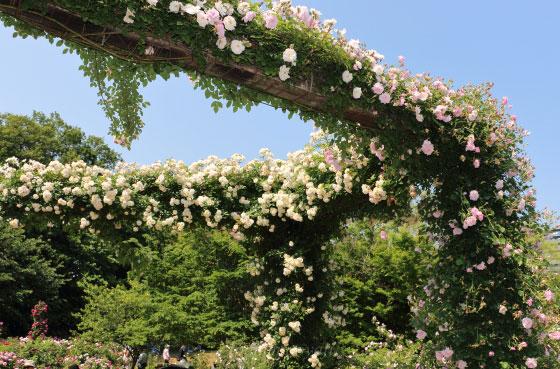 京成バラ園の風景