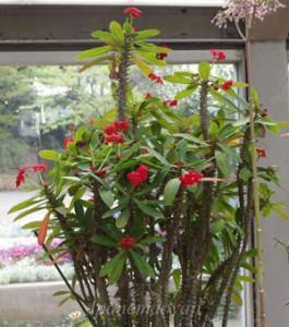 多摩グリーンライブセンターの温室の風景