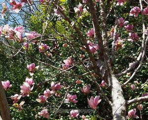 東京薬科大学の植物園 小高木も多く栽培されている