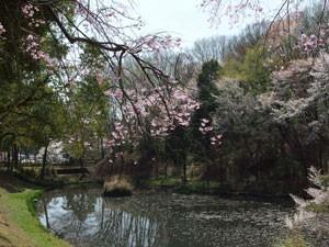 東京薬科大学の構内と思えないほど広い敷地です