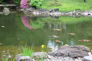 伝法院の池には鯉が泳いでいた