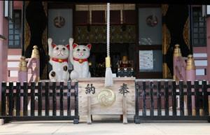 今戸神社本殿には招き猫が招いています