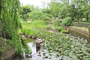 東京都薬用植物園内の風景