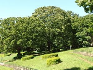 ハーブ園の風景