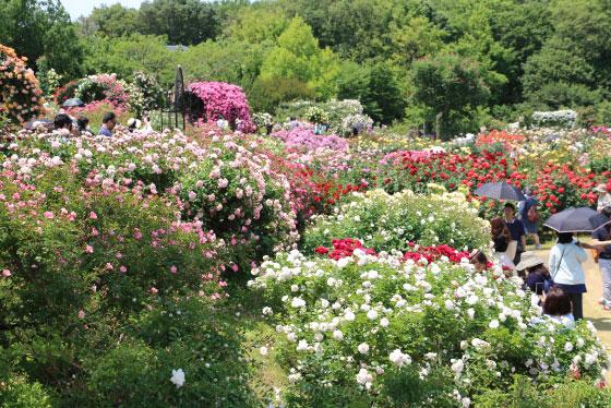 春の晴れた日に生田緑地ばら苑で撮影した風景