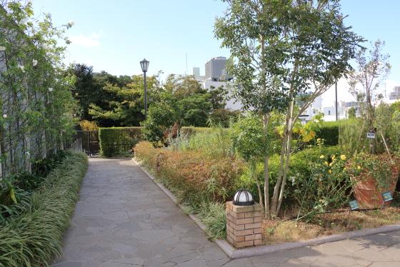 横浜・アメリカ山公園・バラ園