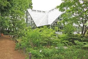 東京都薬用植物園の温室です