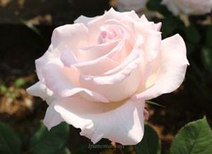 鈴木省三の生誕100年を記念して作出されました