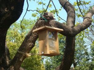 園内には小鳥用の餌箱がある
