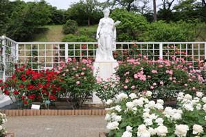 ホワイト クィーン エリザベスは樹高が180cmくらい