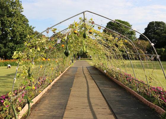 秋の大船植物園の風景