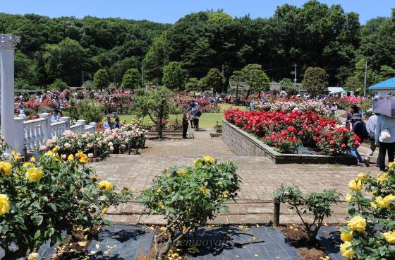 生田緑地ばら苑は川崎市多摩区にある