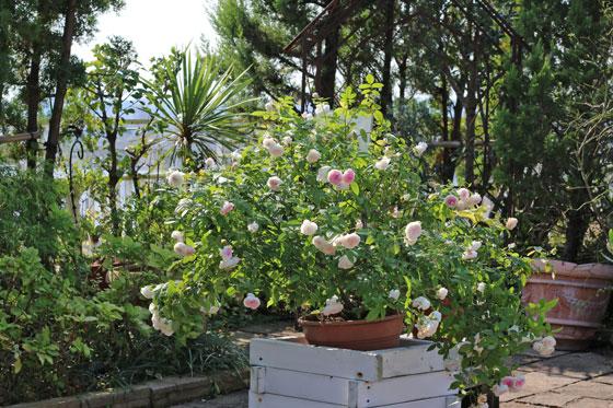 プロトリーフ ガーデンアイランド玉川店の屋上庭園