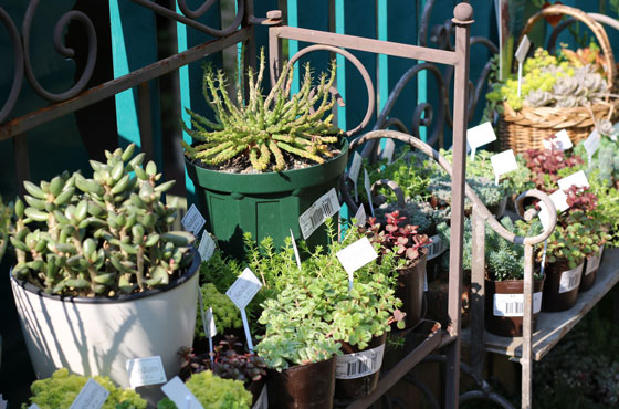 プロトリーフ ガーデンアイランド玉川店には観葉植物もあった